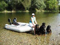 plavanie_psov_rotvajler